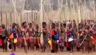 Zulu Umhlanga Reed Dance Ceremony at the Village